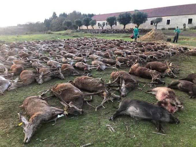 Spanish hunters massacre 500 wild animals
