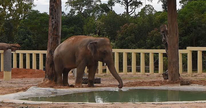 Pakistan's loneliest elephant makes new friend in Cambodia