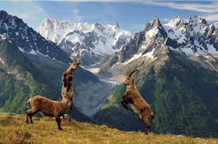 Govt flayed over apathy towards Chitral Gol National Park