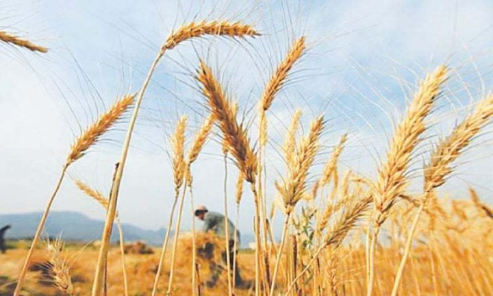 Dry spell may cause low yield of agri products
