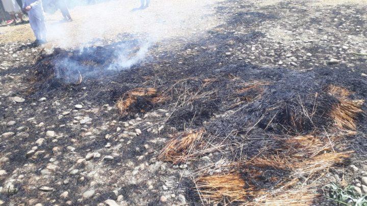 Wheat crop burnt in fire