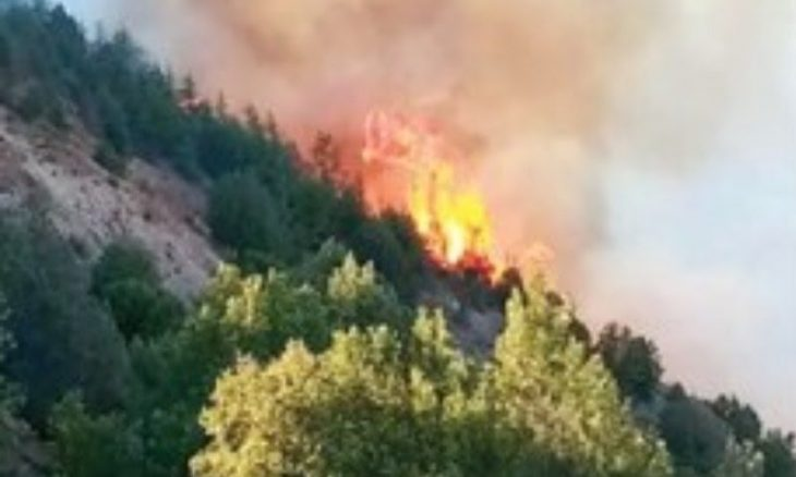 Fire in Chitral Gol National Park