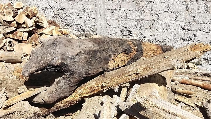 Govt slammed for not allowing locals to use timber
